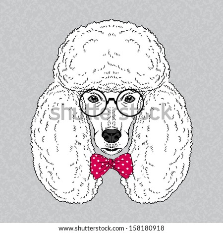 Hand Drawn Vector Fashion Portrait of Poodle - stock vector