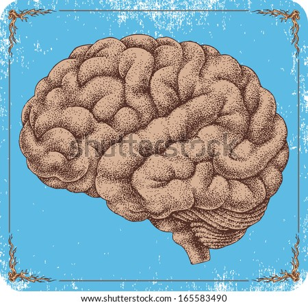 Hand-drawn vector human brain. - stock vector