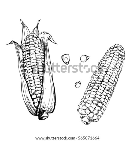 Corn Stock Images, Royalty-Free Images & Vectors ...