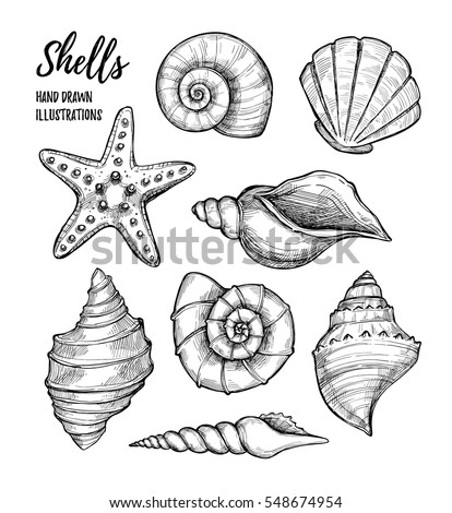 Hand Drawn Vector Illustrations Collection Of Seashells Marine Set
