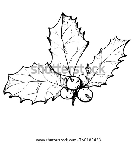 holly line drawing stock images royaltyfree images