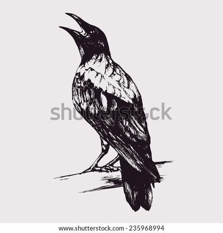 Hand-drawn vector ink black crow silhouette isolated - stock vector