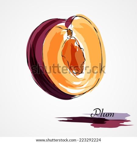 Hand drawn vector purple plum ripe part of fruit on light background - stock vector