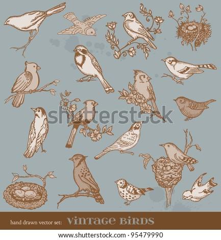 Hand drawn vector set: birds - variety of vintage bird illustrations - stock vector