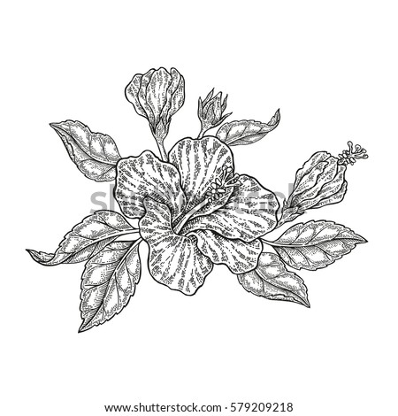 Hand drawn vector tropical flowers. Vintage floral composition, hibiscus flowers and leaves isolated on white background. Illustration engraved