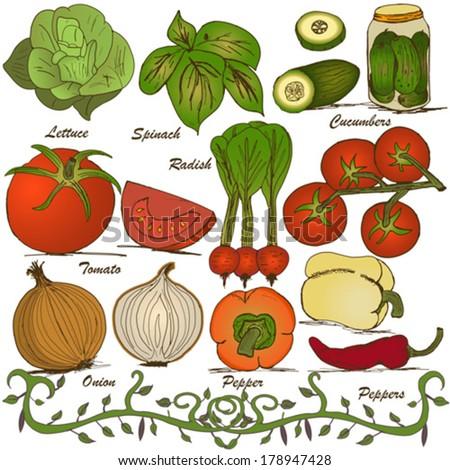 hand drawn vegetable set 3 - stock vector