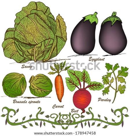 hand drawn vegetable set 2 - stock vector