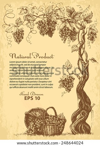hand drawn vine with grapes, baskets and copy-paste space - stock vector