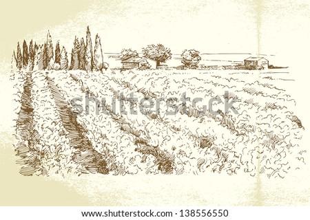 hand drawn vineyard - stock vector