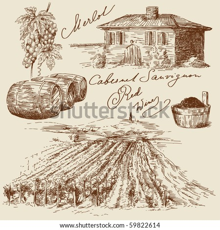 hand drawn vineyards - stock vector