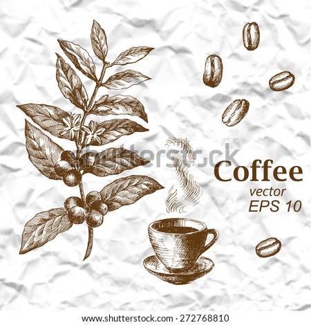 Hand drawn vintage coffee plant - stock vector