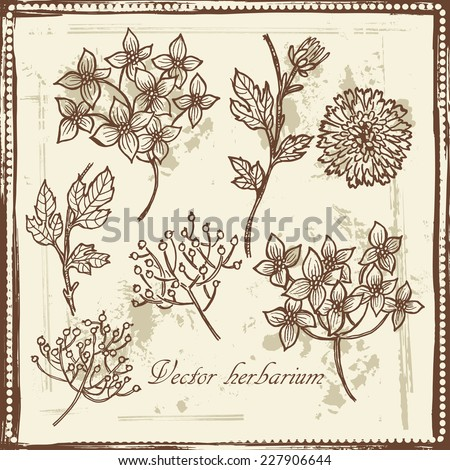 Hand drawn   vintage garden flowers and berries sketch. All objects are conveniently grouped  and are easily editable. - stock vector