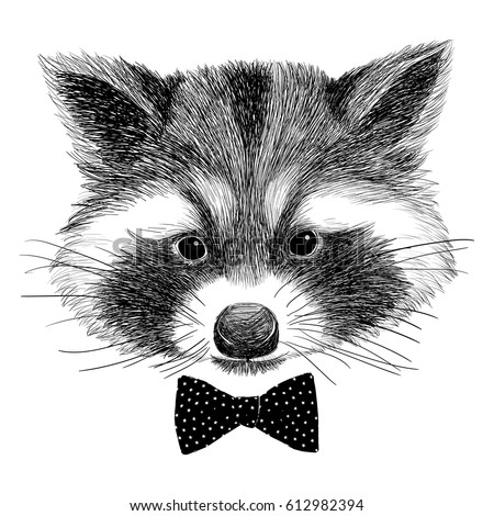 Raccoons Stock Images, Royalty-Free Images & Vectors ... Raccoon Face Illustration
