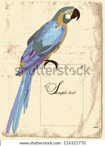 hand drawn vintage parrot - stock vector