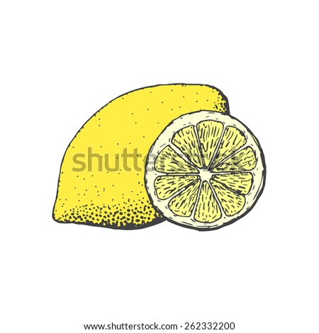 Hand drawn vintage style lemon and a segment of lemon - stock vector