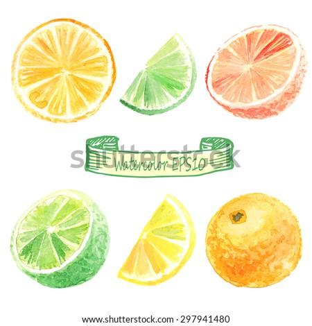 hand drawn watercolor illustration. Citrus set. orange, lime, lemon, grapefruit - stock vector