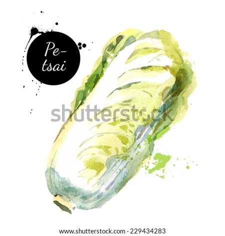 Hand drawn watercolor painting on white background. Vector illustration
