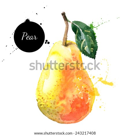 Hand drawn watercolor painting on white background. Vector illustration of fruit pear - stock vector