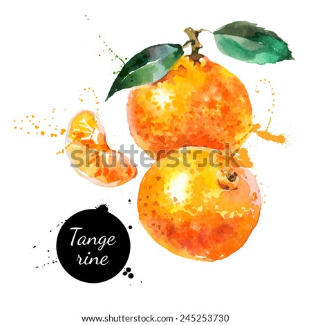 Hand drawn watercolor painting on white background. Vector illustration of fruit tangerine - stock vector
