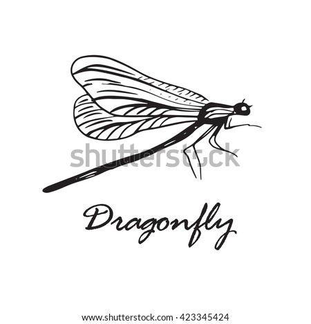 Hand drawn with ink pen dragonfly. Isolated on white background
