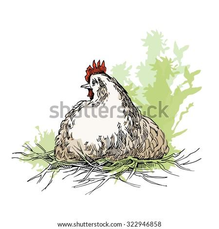 Hand made sketch of chicken. Vector illustration. - stock vector
