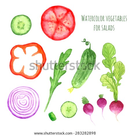 Hand paint watercolor vector vegetables set eat local farm market rustic illustrations with a arugula, onion, pepper, cucumber, tomato, radish. Summer ingredients collection for salads