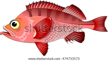 Hand-painted illustration of a fish - freshwater perch