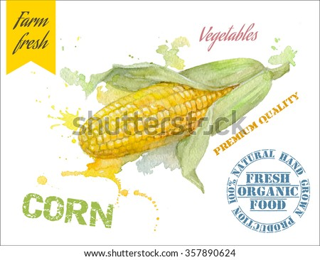 Hand painted watercolor illustration of corn with splashes on white background. Design for food, farmers production and vegetarian menu.  Vector illustration - stock vector