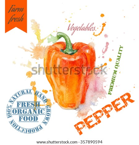 Hand painted watercolor illustration of pepper with splashes on white background. Design for food, farmers production and vegetarian menu.Vector illustration - stock vector