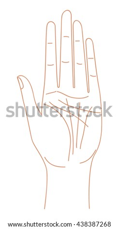 Hand palm line drawing. Hand vector illustration.  Woman hand palm. How to read hand.