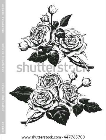 Rose Engraving Stock Royalty Free & Vectors