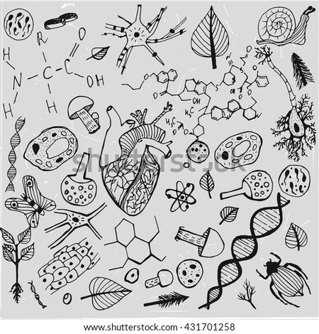 Handdrawn biological image. Editable vector illustration in black and white colors. Botany, biology handwriting with insects, plants and molecules on a gray backdrop for science education presentation
