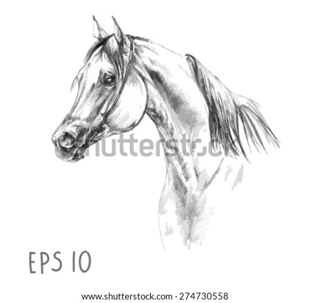 handdrawn of arabian horse sketch with pen in vector format. EPS 10 - stock vector