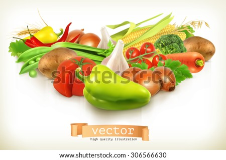 Harvest juicy and ripe vegetables vector illustration isolated on white - stock vector
