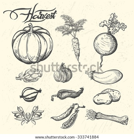 Harvest Vector illustration of vegetables in vintage style. - stock vector