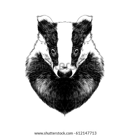 badger head drawing. Black Bedroom Furniture Sets. Home Design Ideas