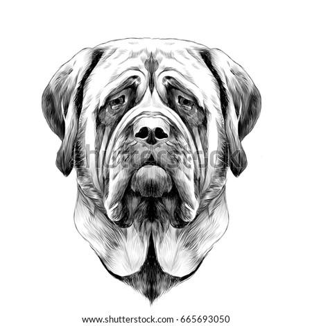 Beautiful Boerboel Black Adorable Dog - stock-vector-head-dog-breed-mastiff-sketch-vector-graphics-black-and-white-drawing-665693050  HD_555989  .jpg