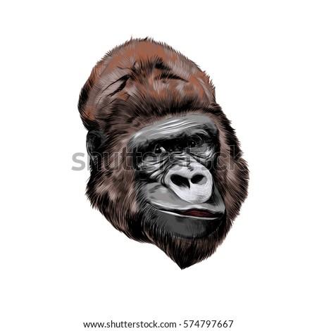 Gorilla vector head - photo#21
