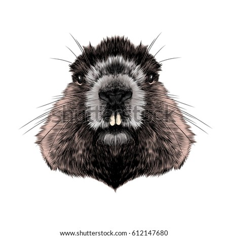 Animal Hairy
