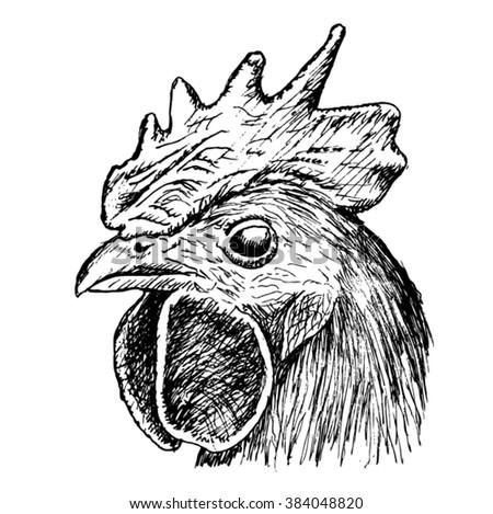 head of a cock sketch - vector - stock vector