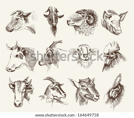 head of farm animals. set vector sketches - stock vector