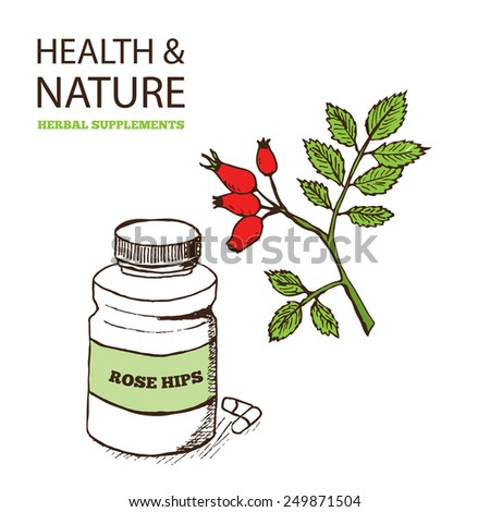 Health and Nature Supplements Collection. Rose Hips - Rosa rugosa  - stock vector