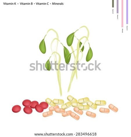 Healthcare Concept, Illustration of Beans Sprouts with Vitamin K, Vitamin B, Vitamin C and Minerals Tablet, Essential Nutrient for Life. - stock vector