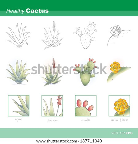 Healthy cactus set - stock vector