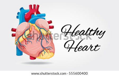 Healthy heart diagram on white background stock vector 2018 healthy heart diagram on white background illustration ccuart Choice Image