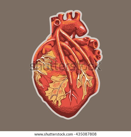 Heart Anatomy on beige background. Vector illustration.
