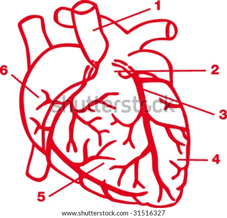 Heart diagram - stock vector