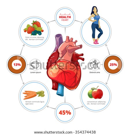 Heart medical vector infographics. Organ and nutrition for healthcare, vegetable and vitamin, fruit illustration - stock vector