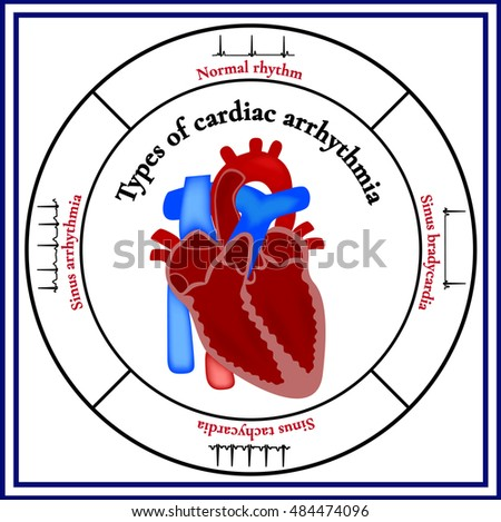 Heart Structure Organ Circulatory System Types Stock Vector