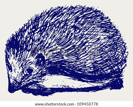 Hedgehog animal. Sketch - stock vector